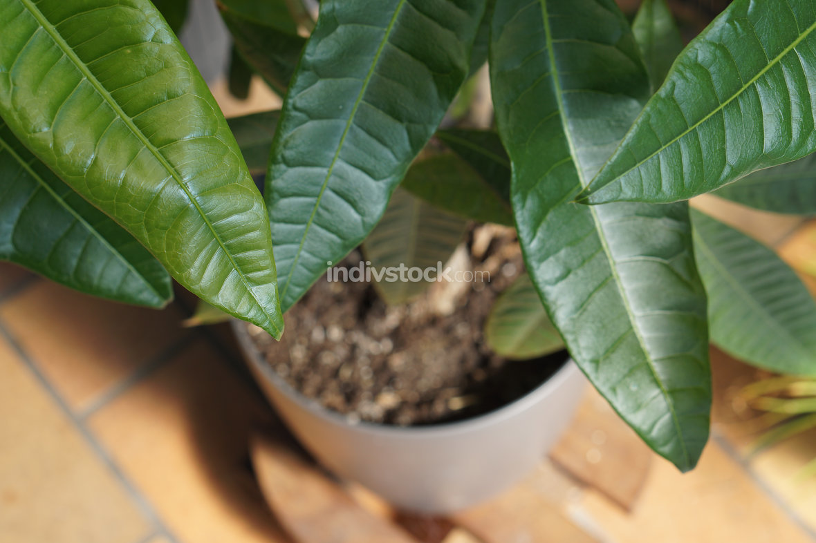 leaves outdoor on a green plant view from top