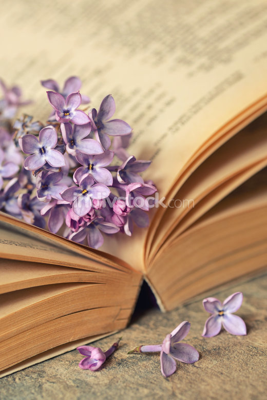 Lilac flowers with old book