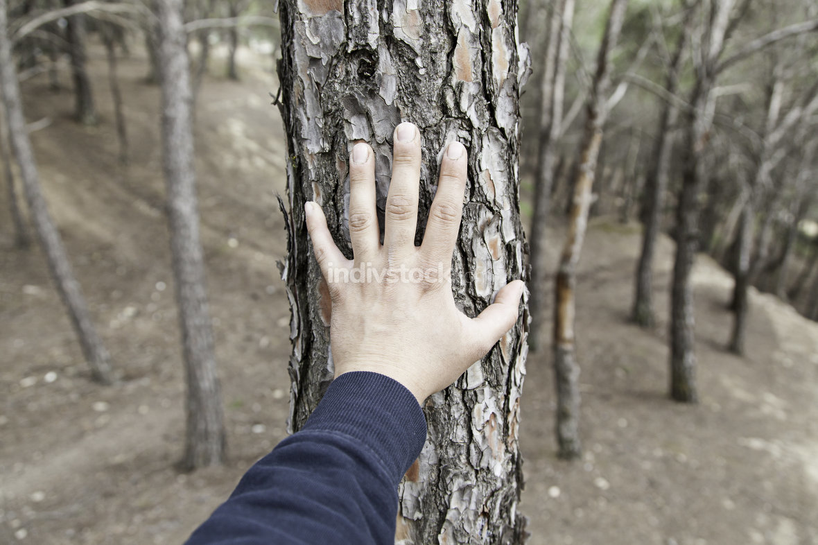 Male hand touching a tree