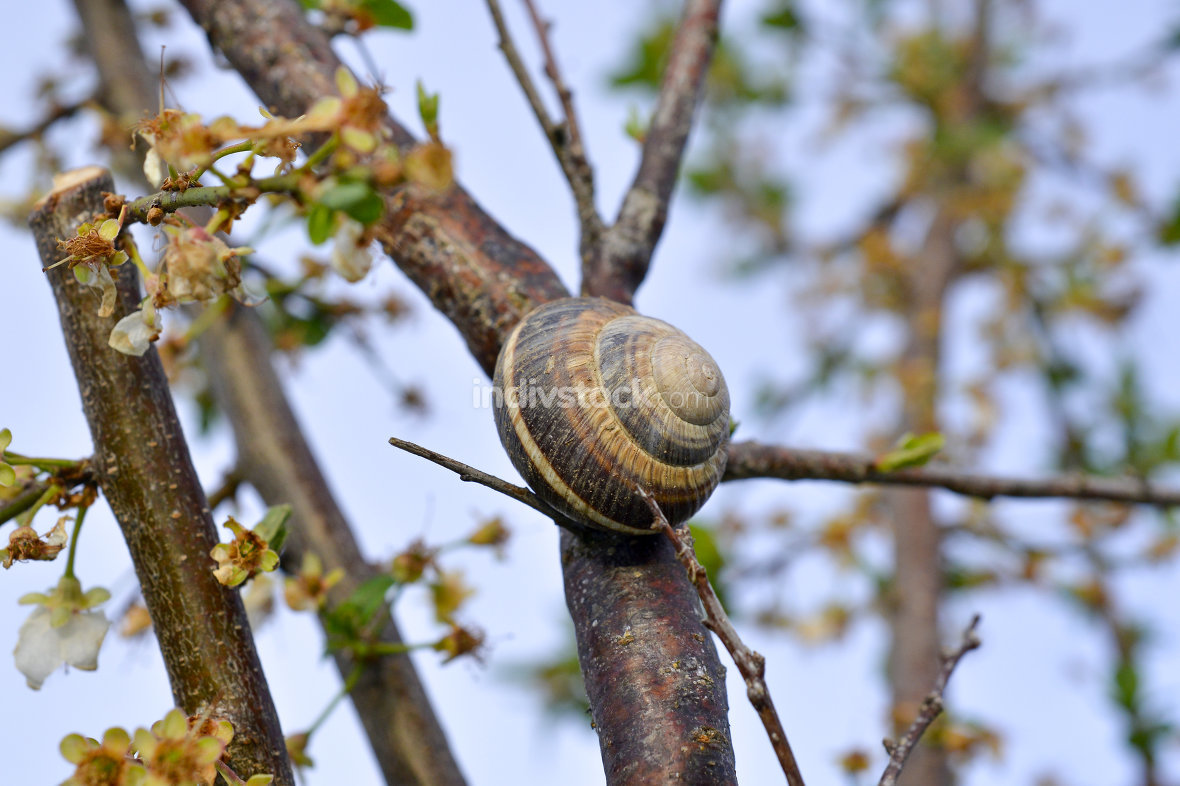 Snail shell on the tree in the garden