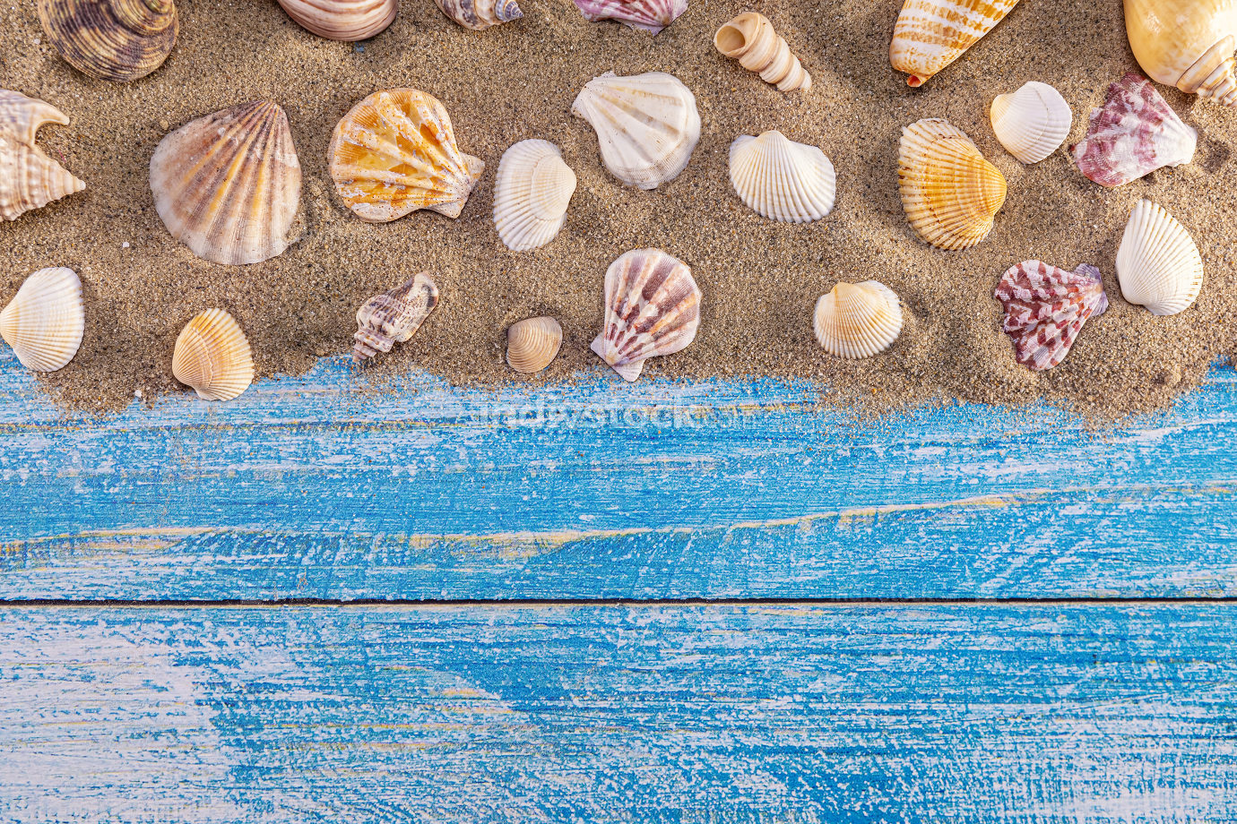 Summer time concept with sea shells on a blue wooden background