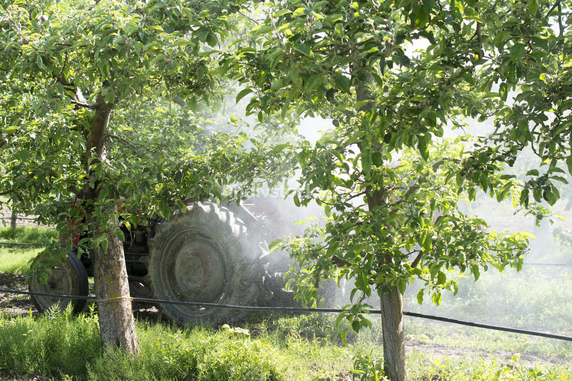 Tractor sprays insecticide in apple orchard fields