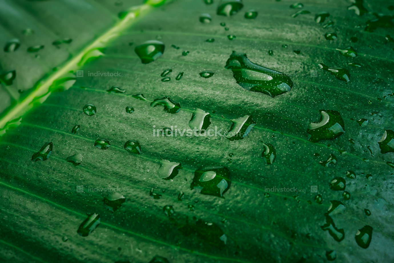 Wet tropical forest background