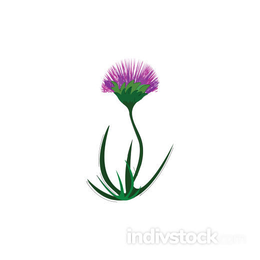 A purple flower vector or color illustration