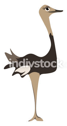 A tall ostrich vector or color illustration