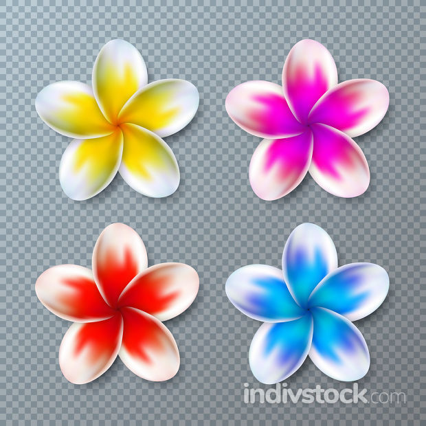 Vector Illustration with Colorful Plumeria