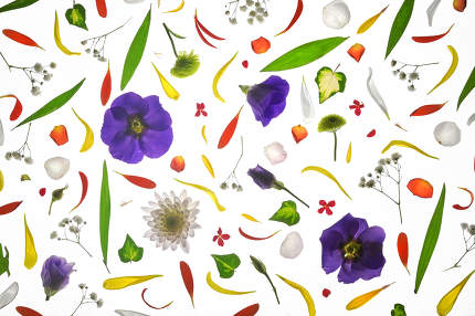 Blooming Colorful Flowers Pattern