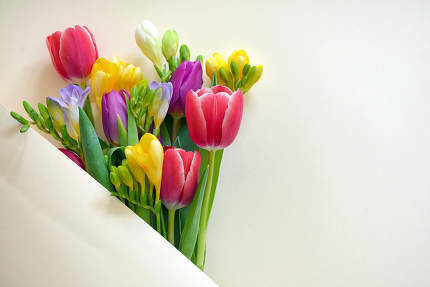 Bouquets Of Tulips and Freesia flowers