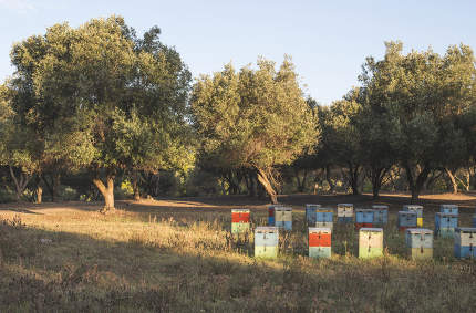 Colorful beehives. Trees on background. Greece