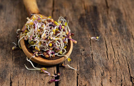 Raw Alfalfa Sprouts