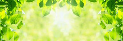 Vibrant green leaves background