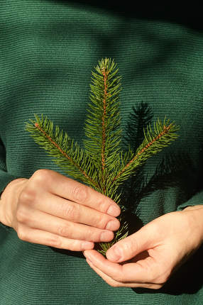 Woman is holding pine tree branch