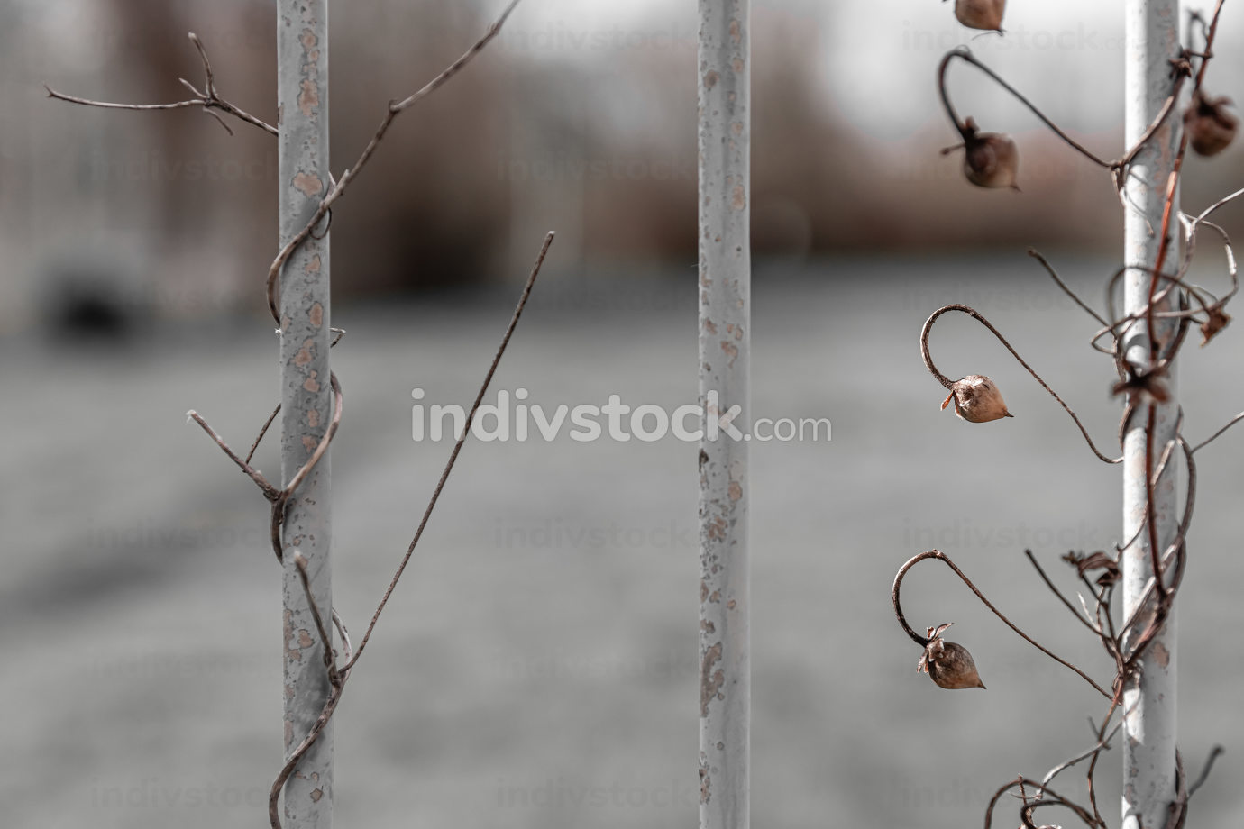 climber plant on a fence