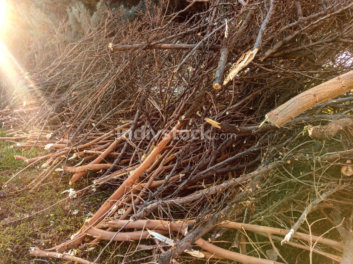 felled and cut off tree branches stacked on the spring lawn