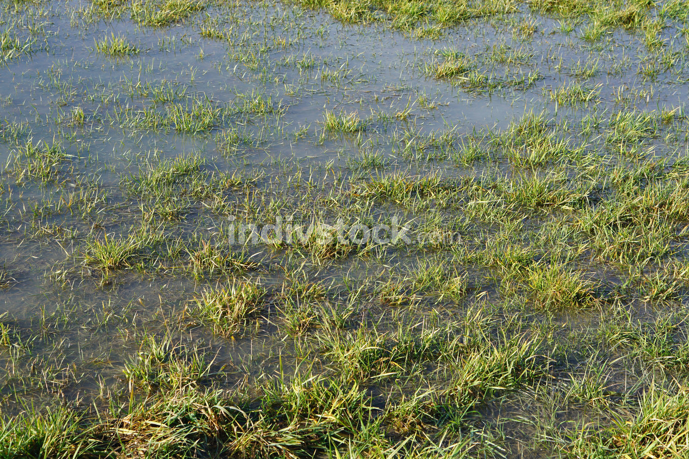 free download: flooded farmland after rain background