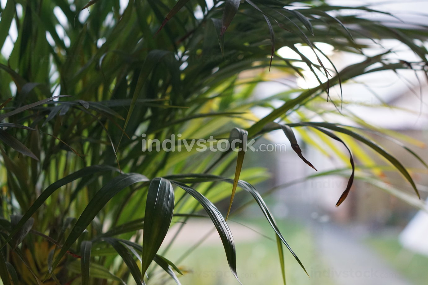 free download: room decoration with green plants near the window