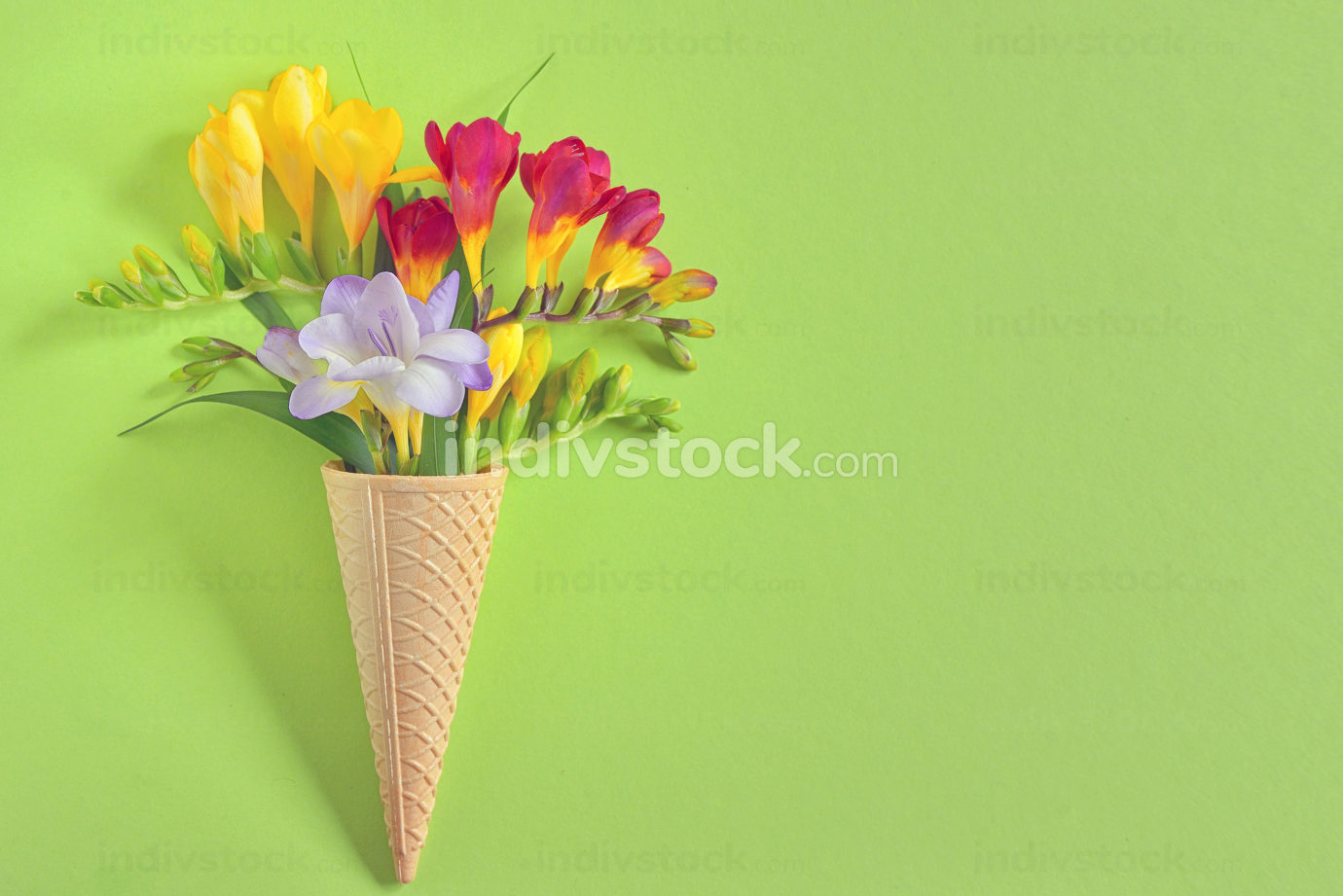 Freesias flowers in ice cream waffles