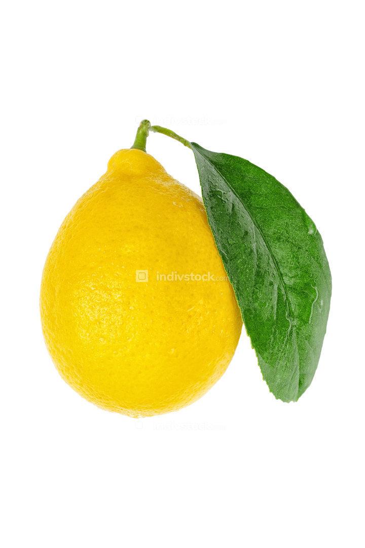 fresh yellow Lemon with leaf isolated on white background