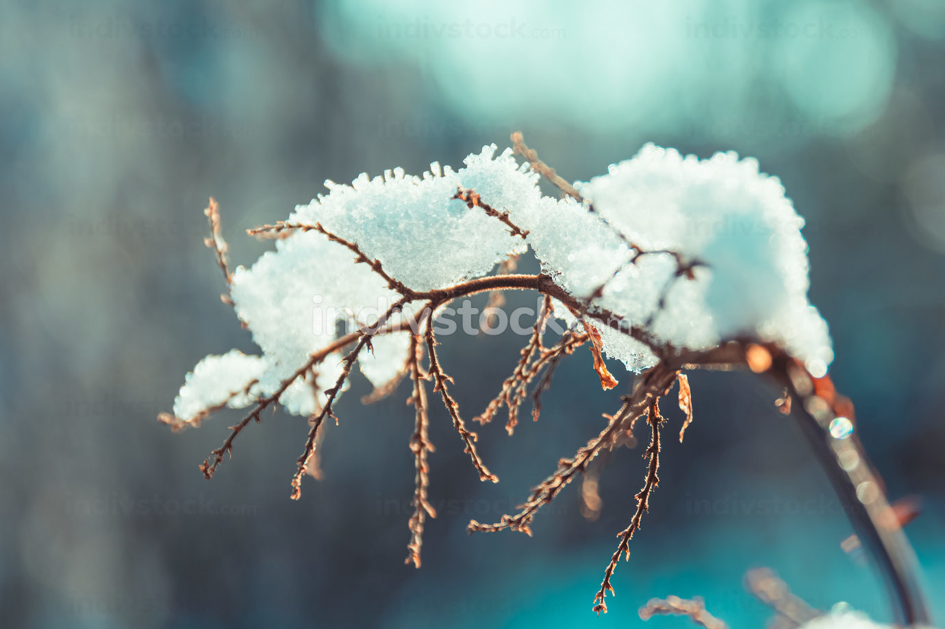 ice and snow on branches in winter