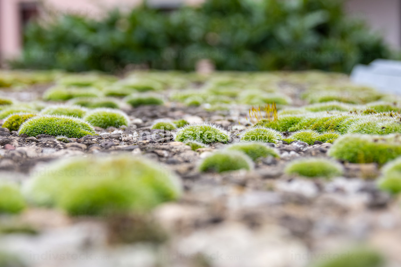 Low angle view over a carpet of green moss