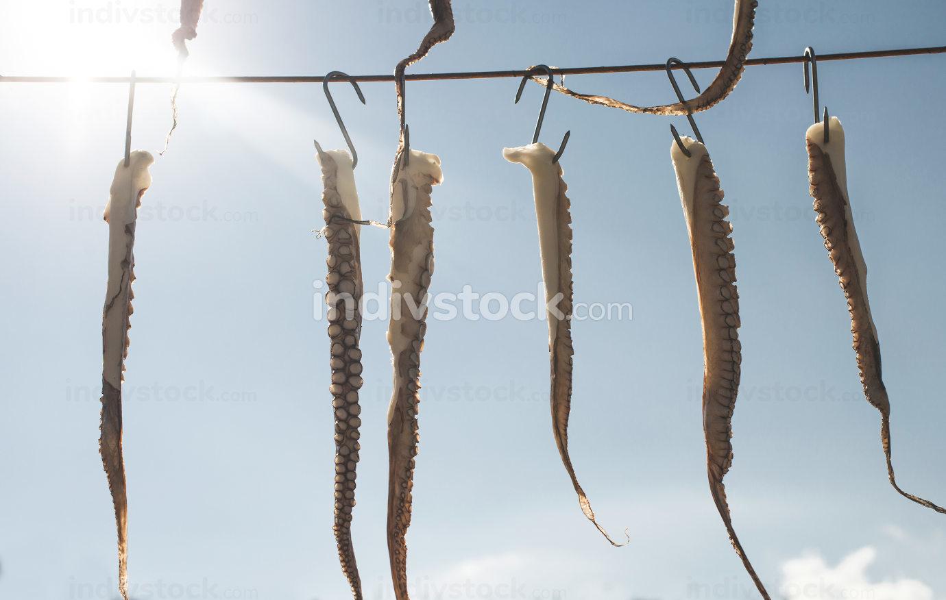 Octopus on rope on sky background. Greece, Gythio