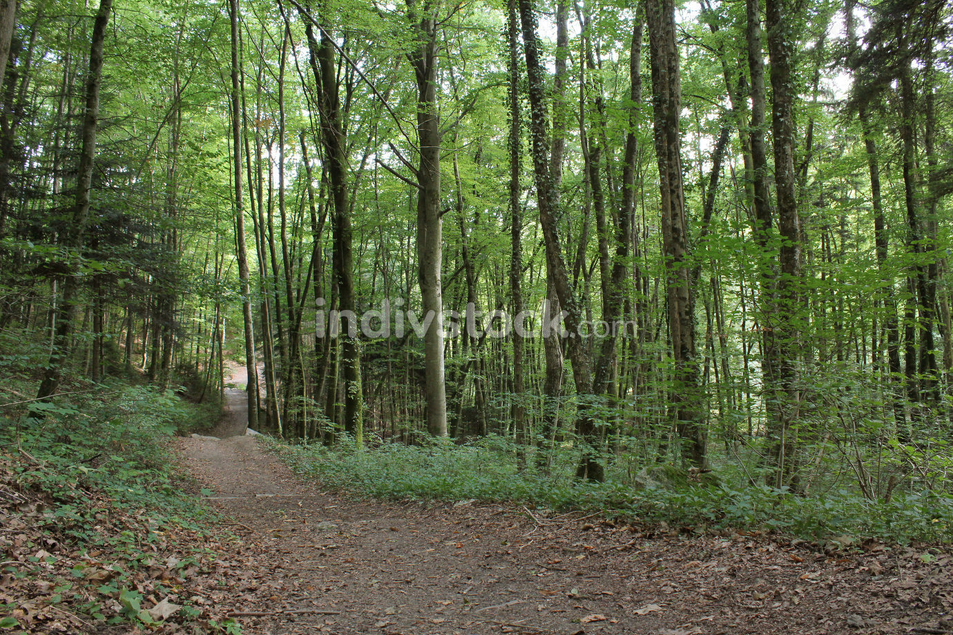 Pathway in a forest