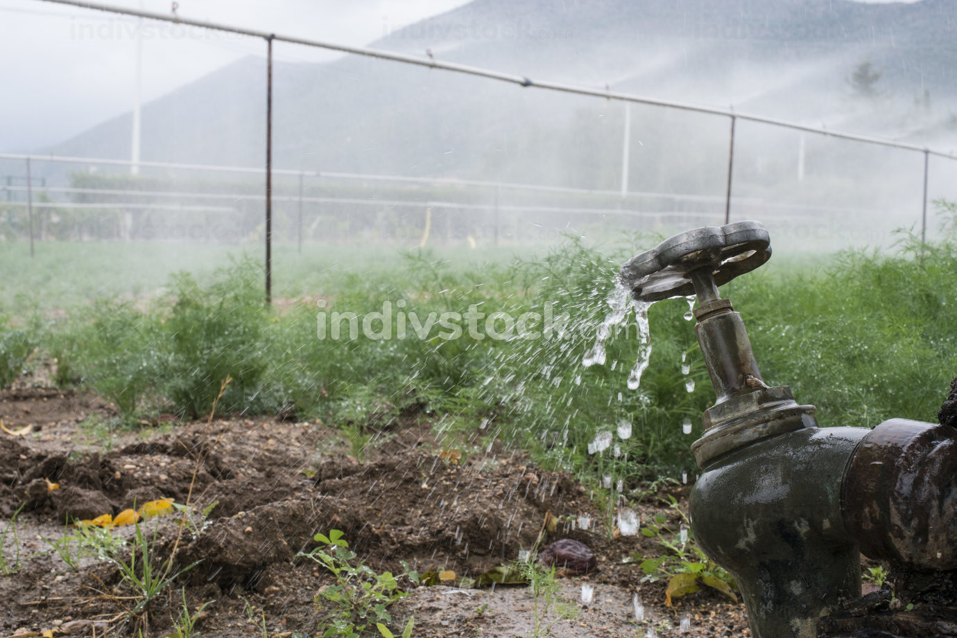 Pipes and tap water for watering plants