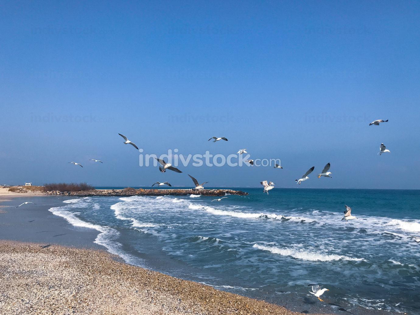 Seabirds Fly Over The Blue Sea