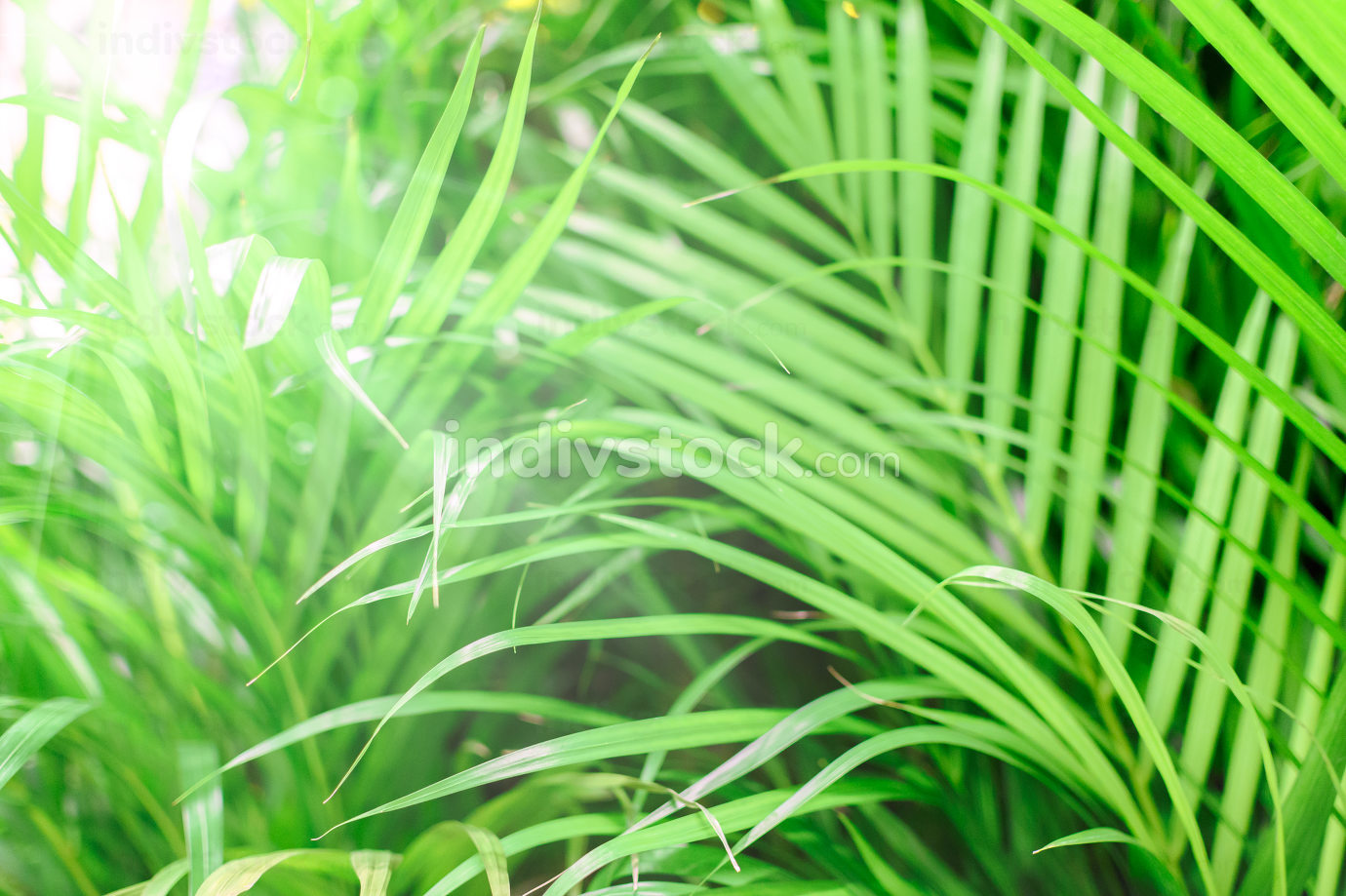 Tropical green background