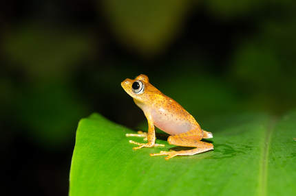 A small orange frog is sitting on a leaf