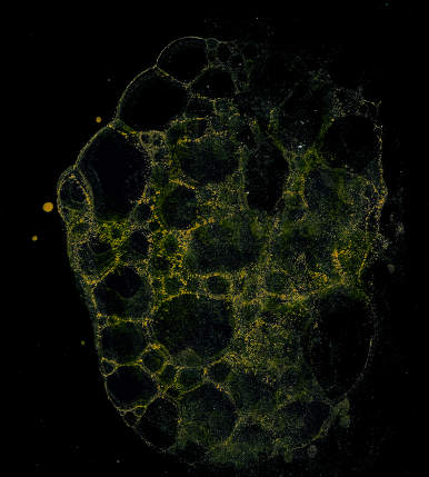 Abstract grunge cellular background