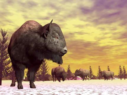 Bisons in winter - 3D render