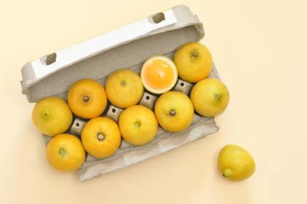 Conceptual Lemon Dozen Chicken Eggs In A Package