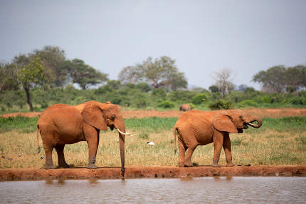 Family of elephants drinking water from the waterhole