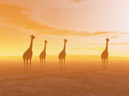 Giraffes in the desert - 3D render