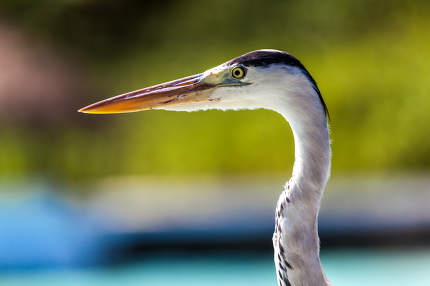 Maldives, travel, holiday, local bird