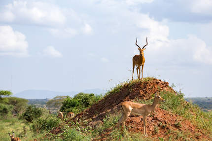 One beautiful antelope is standing on a hill