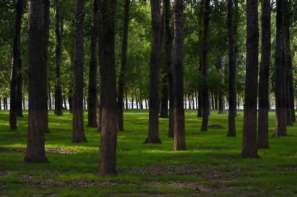 Sunlight in Summer Forest in Romania