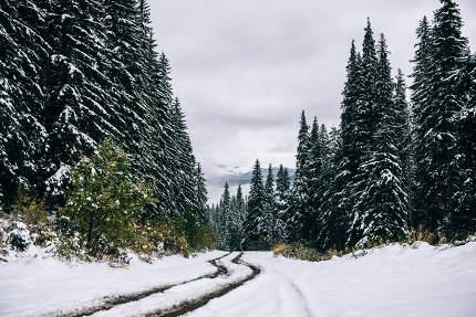 winter landscape in the Carpathian forest