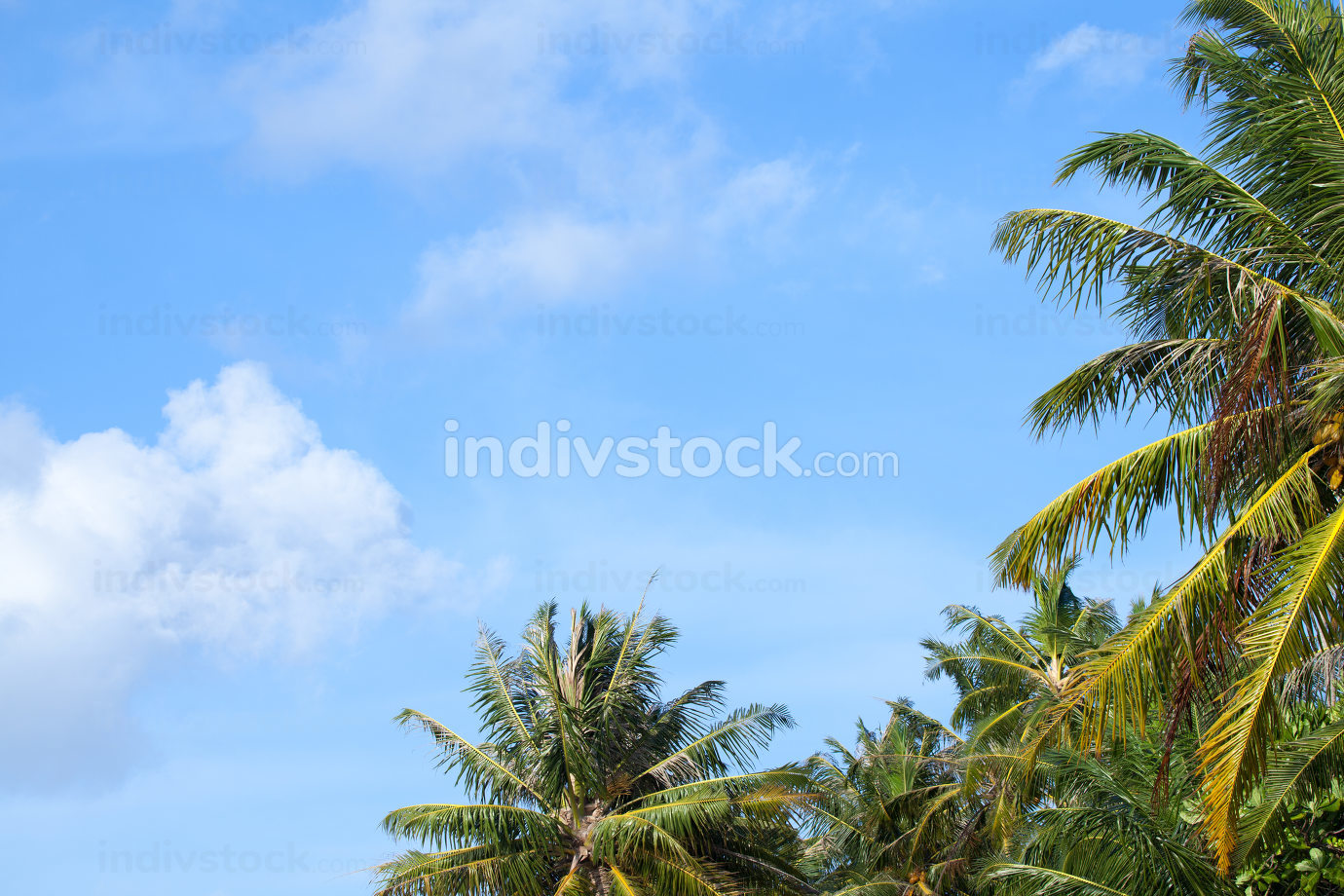 A blue sky with some clouds and a palm trees