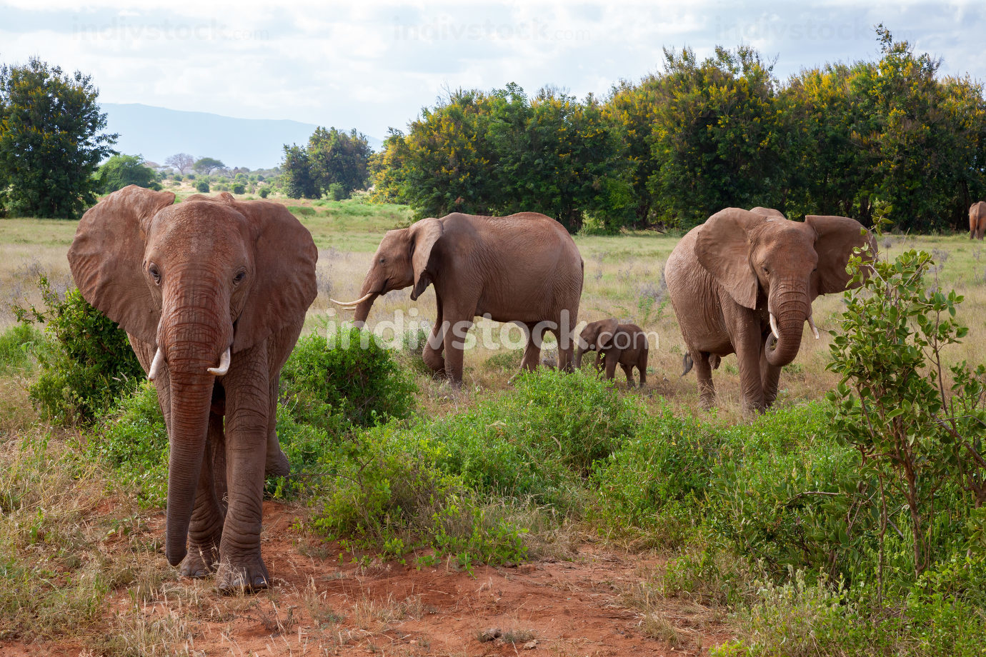 A elephant family in the bush of the samburu national park