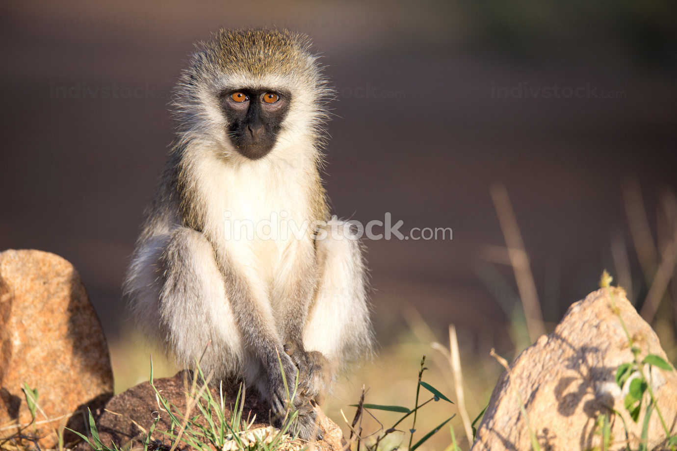 A monkey sits and looks around