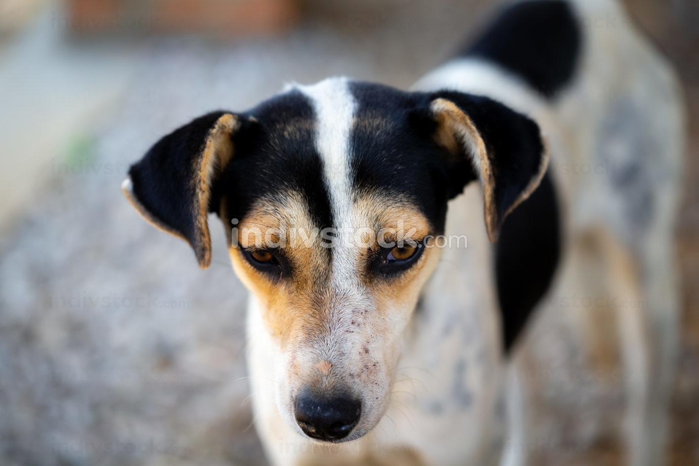 A street dog on the island of Madagascar