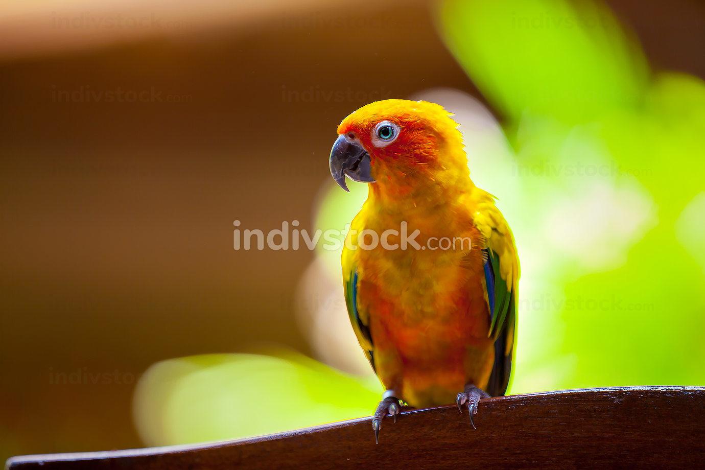 Maldives, a parrot bird