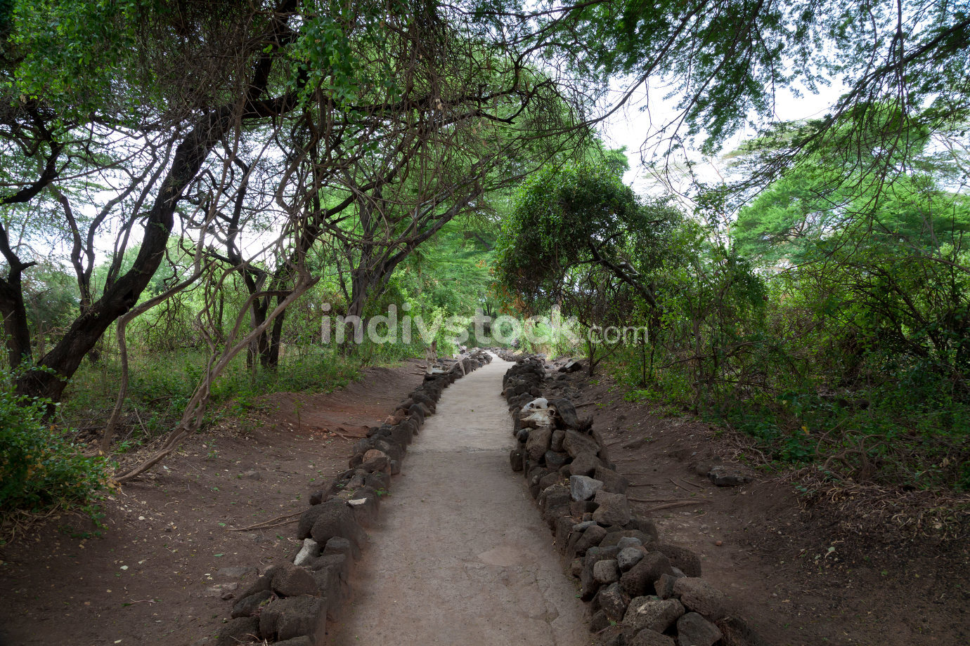 Path in Mzima Springs, scenery of a oasis in Kenya
