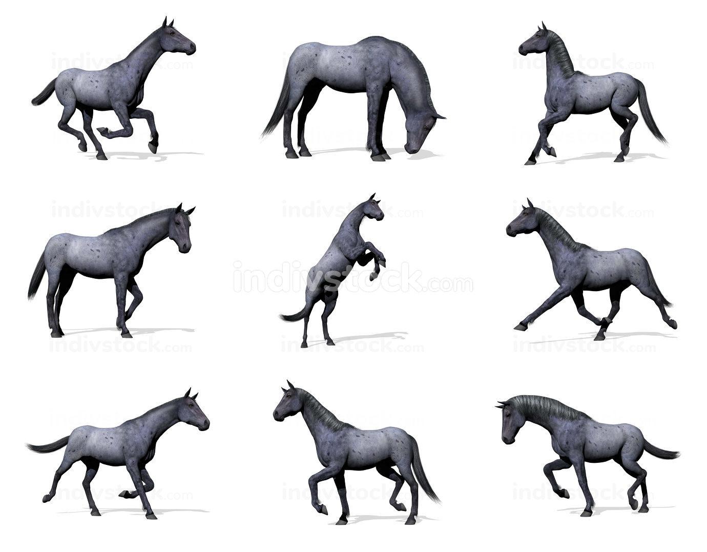 Set of blue roan horses - 3D render