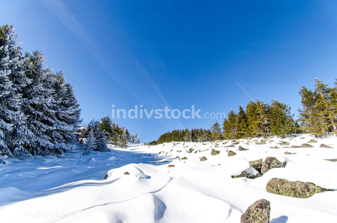 Snowy winter in the mountain, snow-covered trees