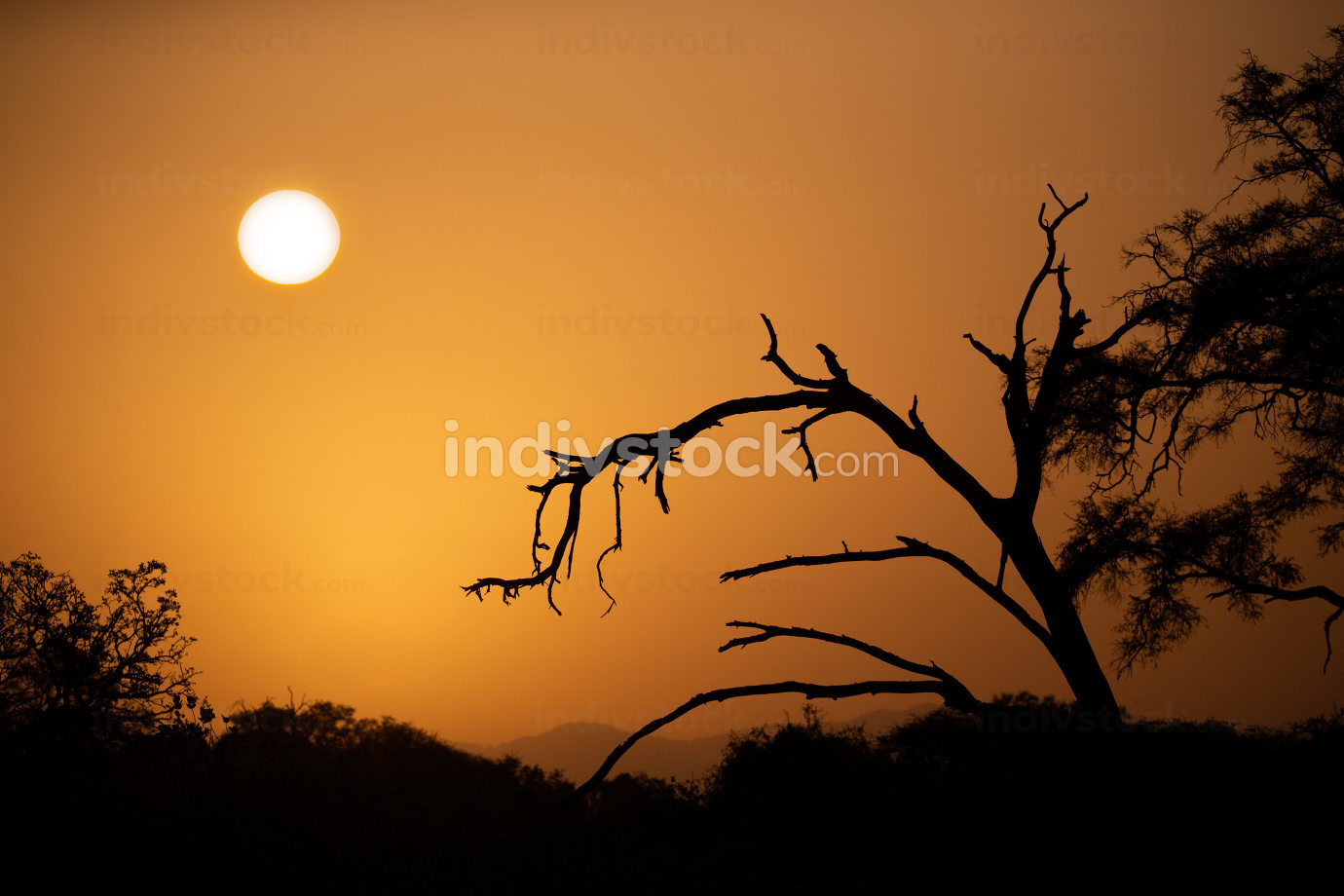 Sunrise over the savannah with trees in foreground