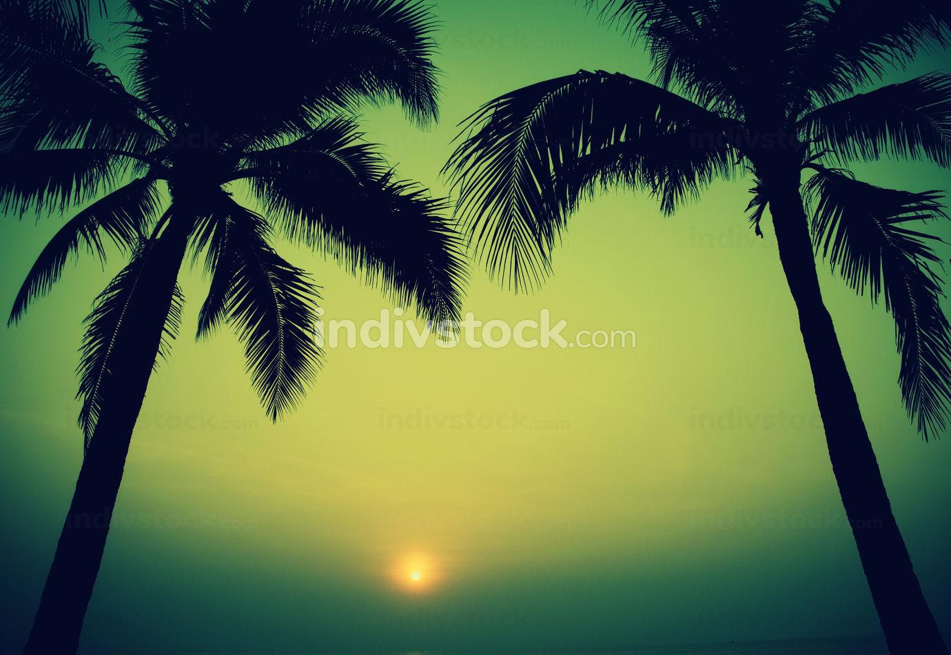 tree sunset vintage