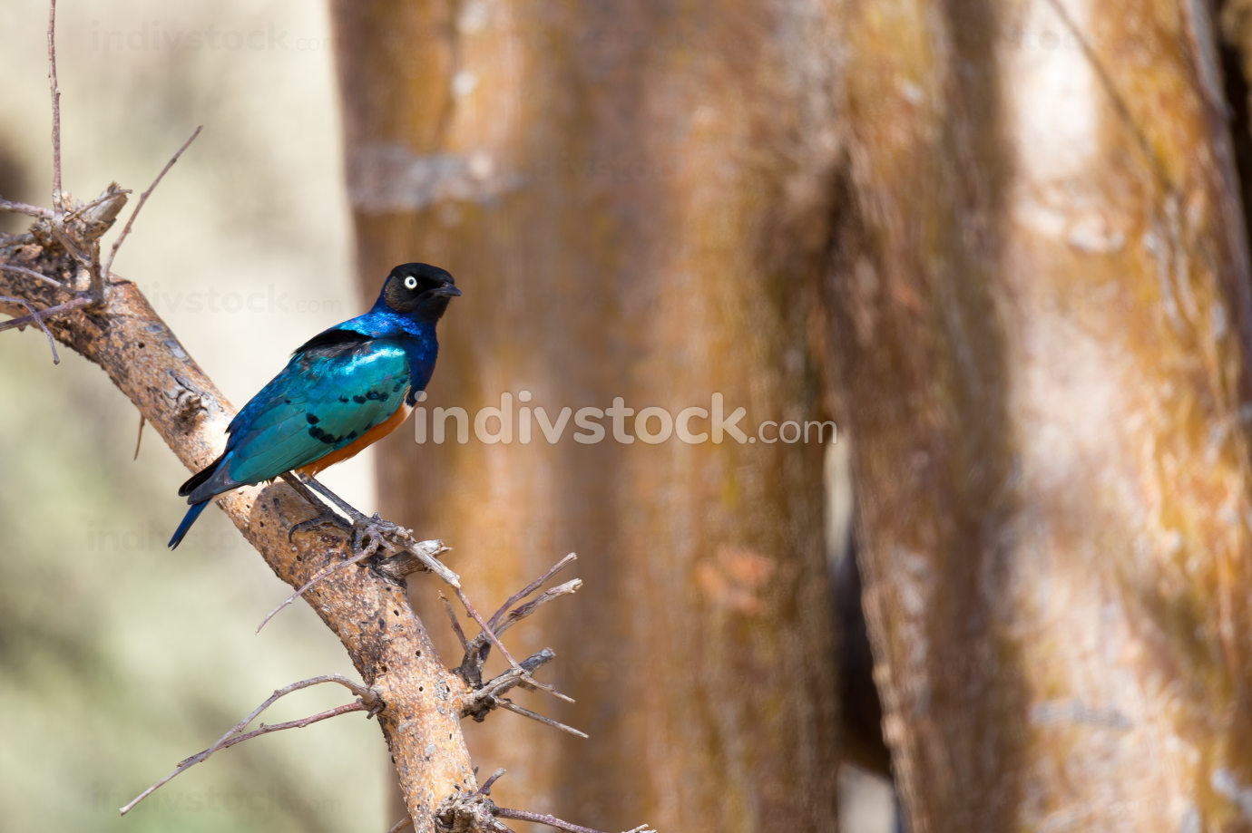 Very colorful native birds sit on brachens of trees